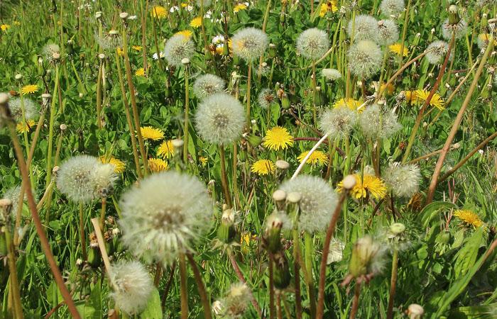 źródła alergii