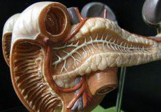 trzustka organ